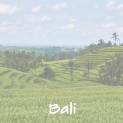 bali_d