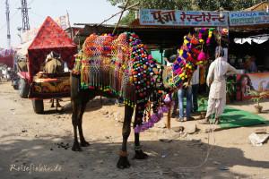 indien pushkar kamelmarkt kamel