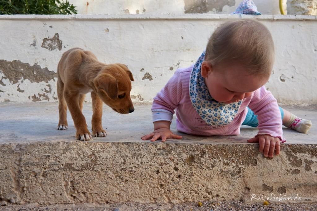 marokko baby und welpe