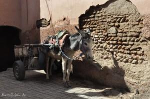 marrakesch fotochallenge orient1
