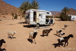 marokko camper ziegen