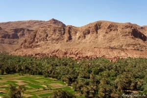 marokko todra schlucht oase